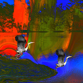 Flying Birds by Edward Gold - Digital Art Places ( digital photography, vivid colors, outdoors, two birds, nature, artistic, lake, digital art,  )