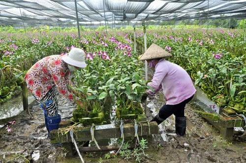 Làng cổ Phước Lộc Thọ, ngắm nhà thưởng hoa 5
