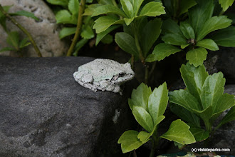 Photo: Tree frog by Sharon McQuarrie-Krampitz