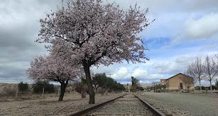 Almendros en flor durante la ruta