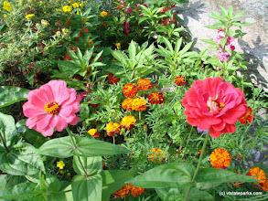Photo: Beautiful flowers at Kamp Killkare State Park