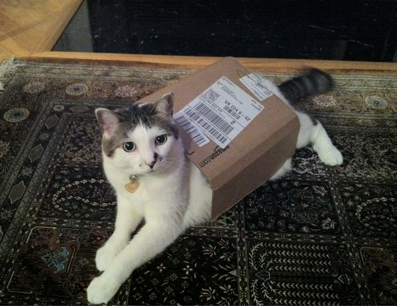 Photo: Also, Special Delivery for Caturday!  This is my baby, Misa, playing in an Amazon delivery box!