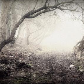 Opole by Marta Bednarska - Landscapes Forests ( forest fog )