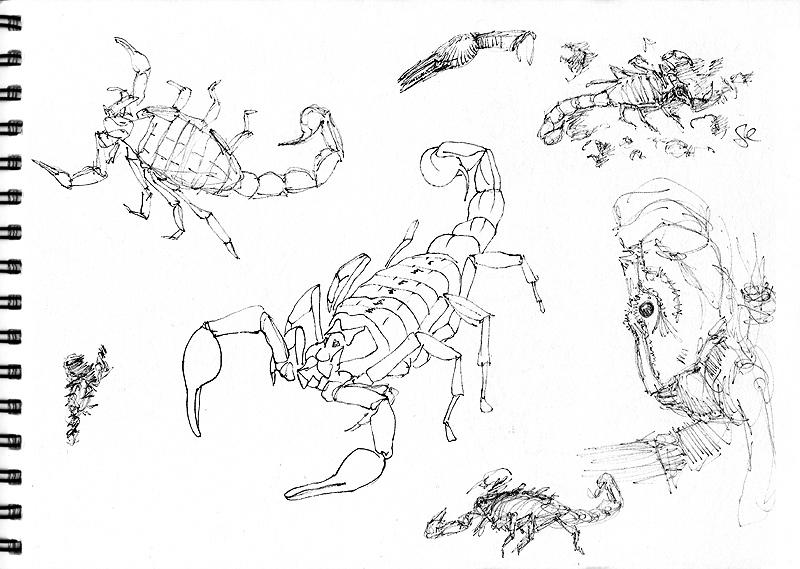 Photo: sunbathing scorpion