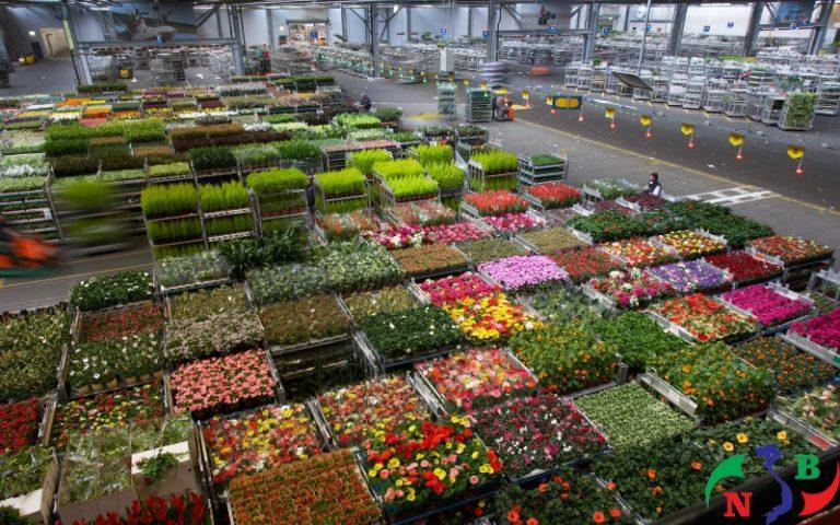 Kho lạnh bảo quản hoa tươi – giải pháp hoàn hảo cho thị trường hoa