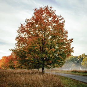 Autumn in New England by Robin Seaholm - Landscapes Forests ( red, green, fall, leaves, new england, road, tree, autumn, trees, colors, fog )
