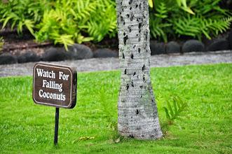 Photo: Alert (on 'Big Island').
