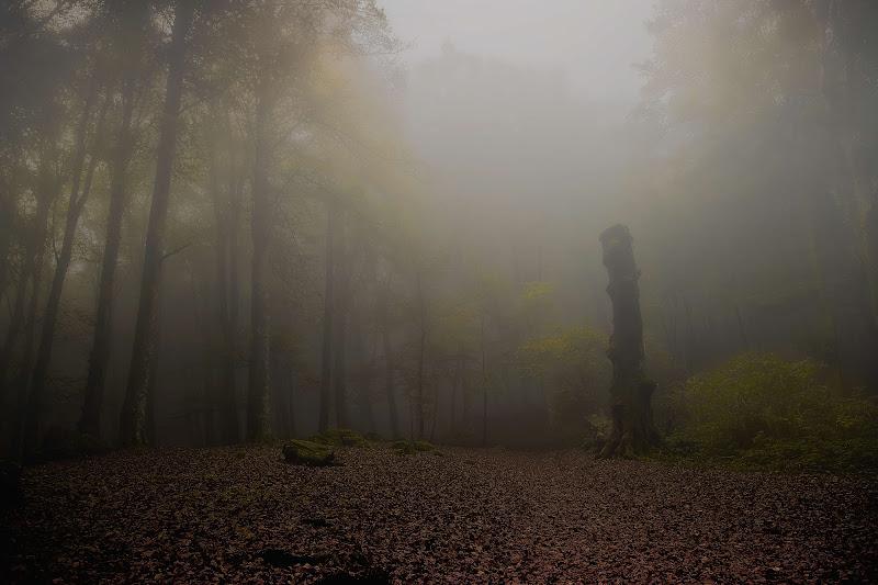 Perdersi nella nebbia di paolo1954