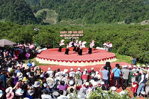 Du lịch Mộc Châu, ngày hội hái quả