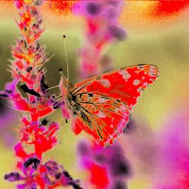butterfly by Mickael Lambert - Digital Art Animals