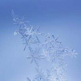 Ice Sculpture by Tomáš Celar - Abstract Macro ( canon, sculpture, tomáš, celar, blue, ice, flake, snow, mp-e, snowflake, pretty )