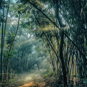 Foggy Morning  by Topu Saha - City,  Street & Park  Street Scenes ( ray, street, forest, morning, sun rays, rays, foggy, bangladesh, winter, nature, fog, mymensingh, sunrise, , #GARYFONGDRAMATICLIGHT, #WTFBOBDAVIS )