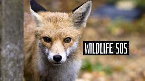 Wildlife SOS thumbnail