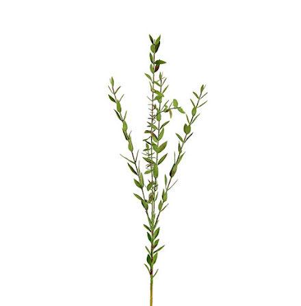 Eucalyptus fin Kvist 70 cm