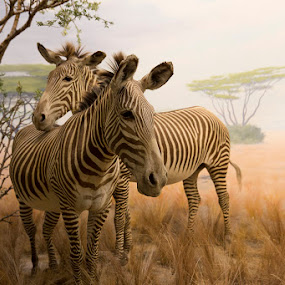 Zebra in Diorama by Janet Marsh - Animals Other Mammals ( stuffed, aquarium, zebra, diorama,  )