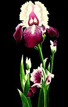 Photo: 419, Нетронина Наталья, Серия Цветочный калейдоскоп - Ирис бардовый, Масло, замша (живопись по бархату), 45х30см,