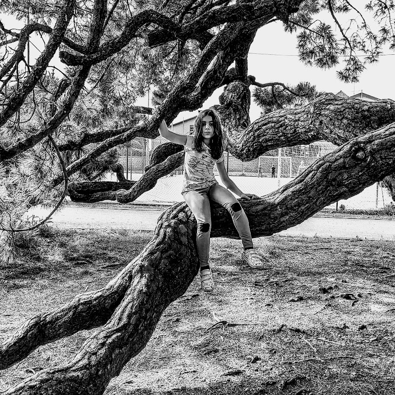 l albero di bydavid