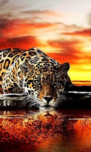 Leopard live wallpaper for PC-Windows 7,8,10 and Mac apk screenshot 1