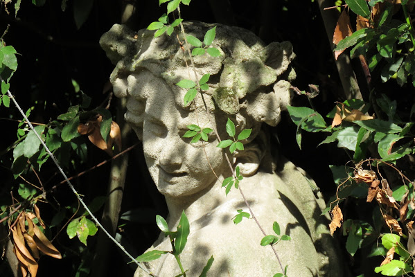Between the leaves di Erader