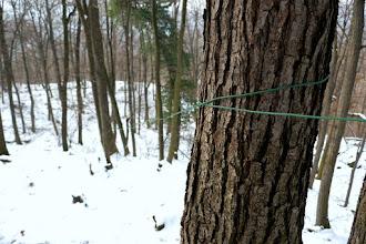 Photo: Lejjebb zöld zsinór kisér jobbról.