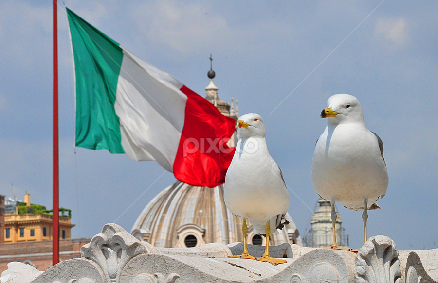Italy by Lina Sariff - Animals Other ( pwcflags, pets )