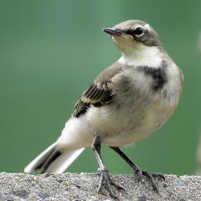 by Philip Kruger - Animals Birds