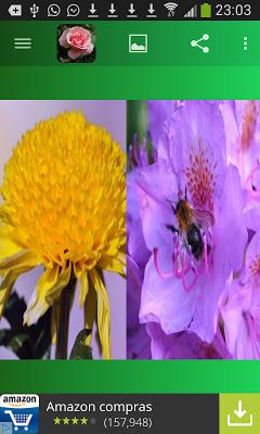 Imágenes de Flores - screenshot