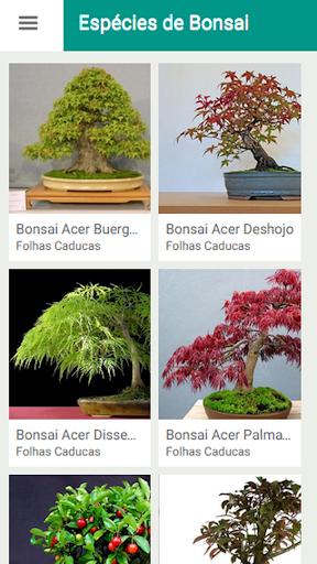 Espécies de Bonsai