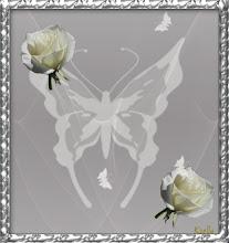 Photo: Lepke ezüst keretbe,rózsákkal.