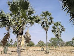 Photo: las kokosowy