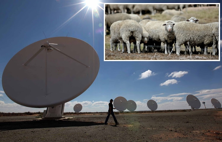 BLOCK: The KAT-7 telescope, a precursor to the much larger MeerKAT Karoo telescope and SKA, which has run into opposition over its plan to acquire land, used for sheep farming (Inset). Pictures: SUNDAY TIMES
