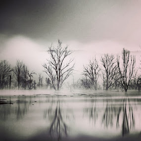 #Drowned #reflection #deadtrees #bush #Australia #blackandwhite #trees by David Davies - Uncategorized All Uncategorized (  )