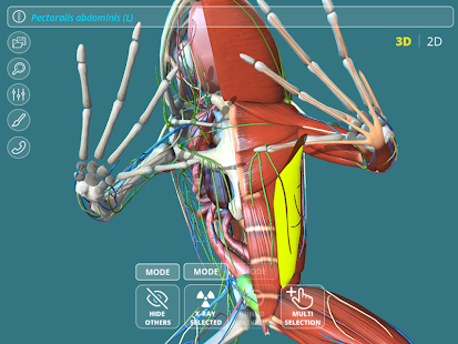 Visual Anatomy 3D - Frog - Apps on Google Play