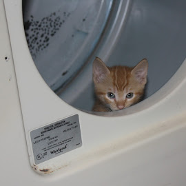 by Brendon Hallman - Animals - Cats Kittens (  )