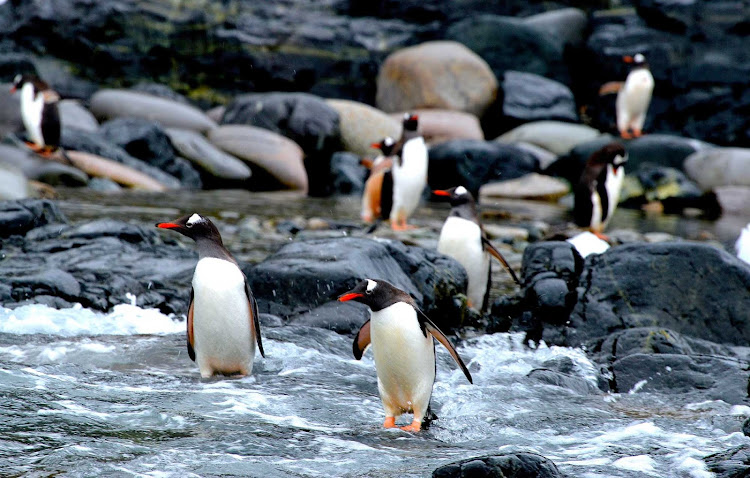 Penguins on the shore of Antarctica seen during an expedition cruise.