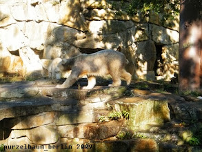 Photo: Die Neugier siegt - Knut geht hinterher ;-)