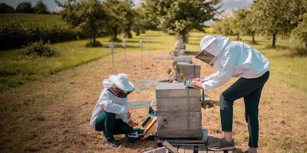 Te presentamos al equipo que usa el aprendizaje automático para intentar salvar a las abejas de todo el mundo