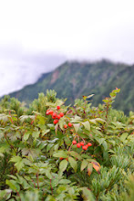Photo: もうすぐ、山は秋本番を迎えます。