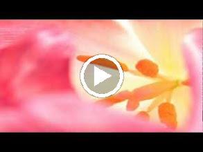 Video: Antonio Vivaldi  La Sena Festeggiante (RV 693) - I XXII Coro  Di queste selve venite o numi -