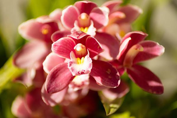 Orchidea Primaverile di EB