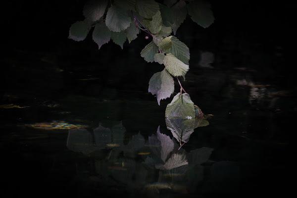 foglie di lago di fabio pelosi