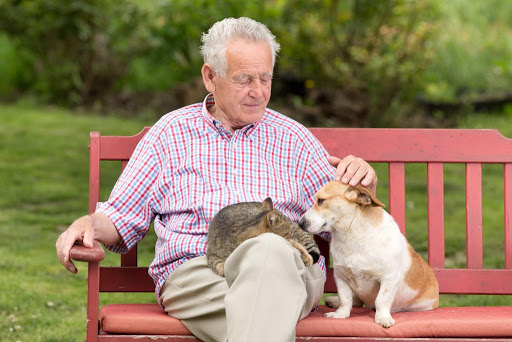 Tips for Retired First-Time Pet Owners