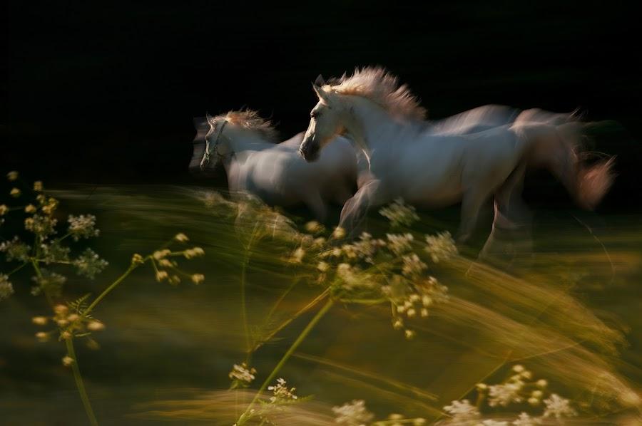 by Milan Malovrh - Animals Horses ( pwc moving animals,  )