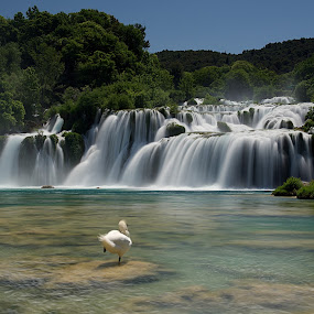 Swan Lake by Charlie Davidson - Landscapes Waterscapes ( waterscape, waterfall, croatia, swan, long exposure,  )