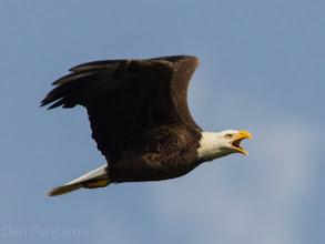 Photo: Pearland Bald Eagle