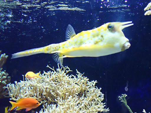 モナコ海洋博物館