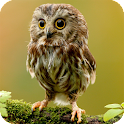 Owl Pack 2 Live Wallpaper icon