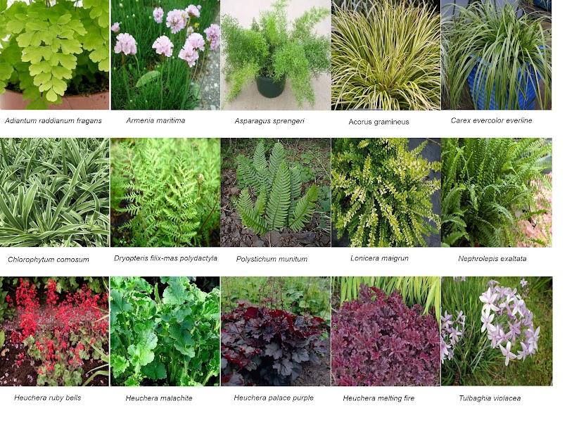 Especies presentes en el jardín vertical