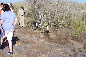 Photo: Albatross nest right on trail - not so smart