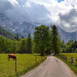 Logar by Dunja Milosic Odobasic - Landscapes Mountains & Hills